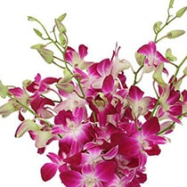Orchids Flowers mumbai
